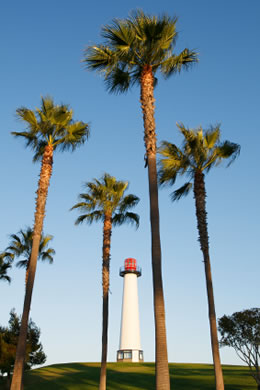 Long Beach Palm Trees